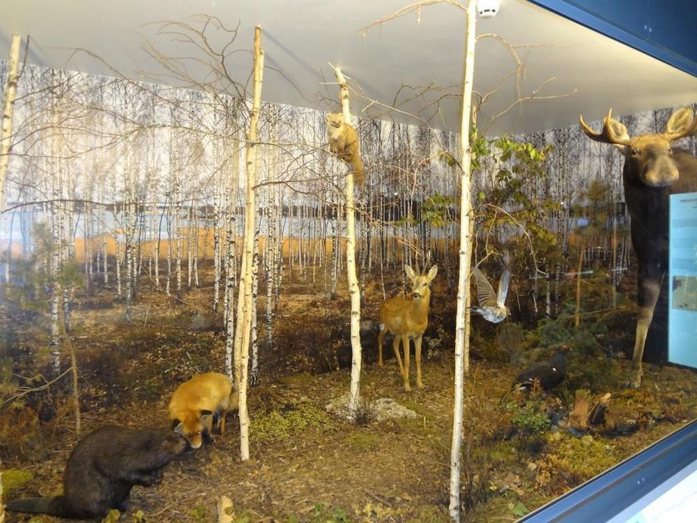 Центр Ледникового периода, Тарту