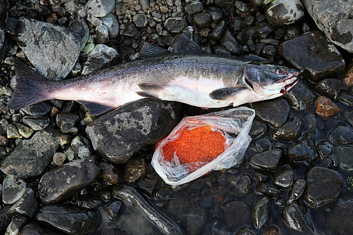 лосось с икрой