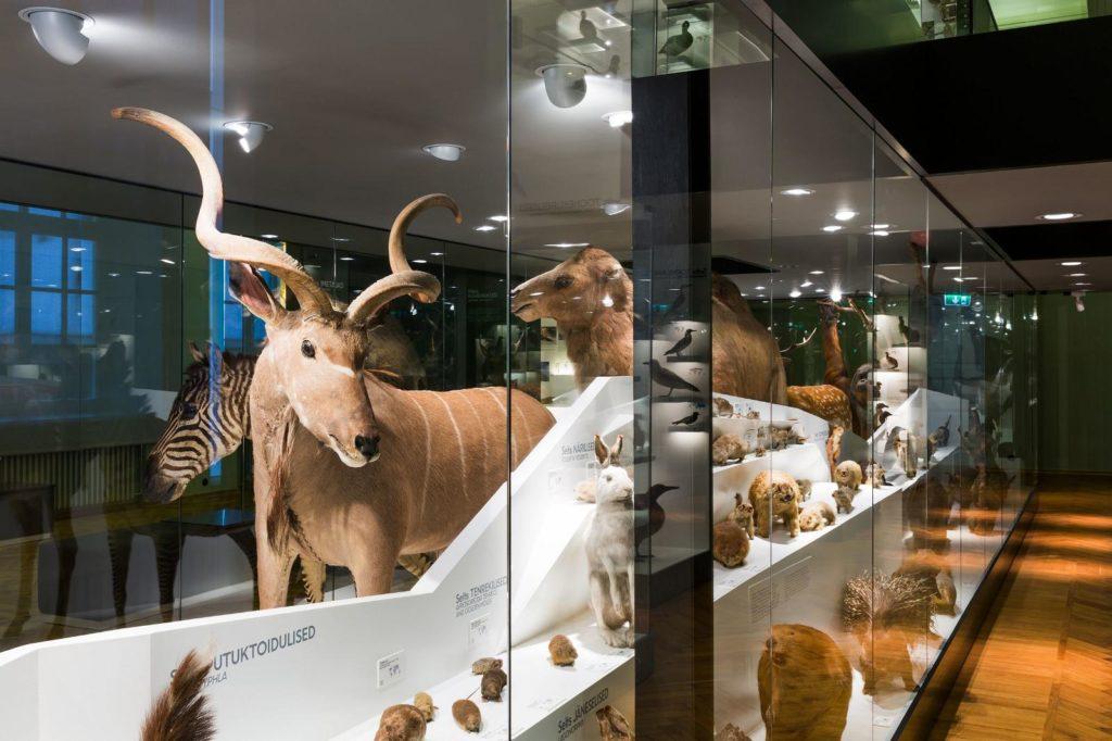 Музей естественной истории Тартуского университета